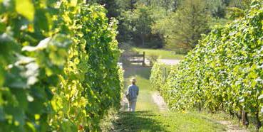 wine-orchard-lfc